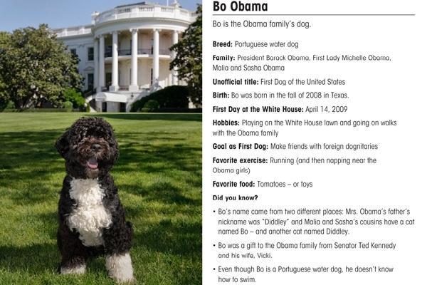 Bo the obama s dog gets baseball card new scandal
