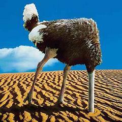 http://writingjunkie.net/images/ostrich-head.jpg